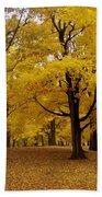 Fall Series 5 Beach Towel