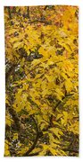Fall Tree Leaves 2 Beach Towel