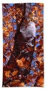 Fall Tree Beach Towel