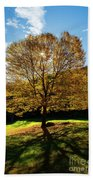 Fall Tree Silhouette Kent Falls State Park Connecticut Beach Towel