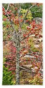 Fall Tree With Intense Colors Beach Towel