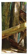 Fallen Redwood Trees Forest Beach Towel