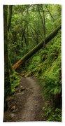 Fallen Tree On The Trail Beach Towel