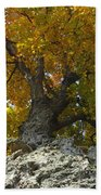 Falling Tree Beach Towel