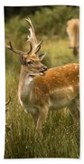 Fallow Deer Beach Towel