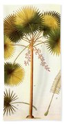 Fan Palm Beach Towel