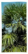 Fan Palm Tree Beach Towel