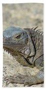 Fantastic Gray Iguana With Spines Along His Back Beach Towel