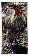 Fat Tuesday - Mardi Gras Chicken Beach Towel