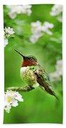 Fauna And Flora - Hummingbird With Flowers Beach Sheet