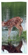 Fawn At The Water Hole Beach Towel