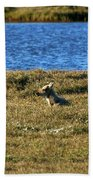 Fawn Caribou Beach Towel