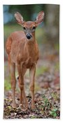 Fawn In Woods At Shiloh National Military Park Beach Towel