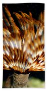 Feather Duster Beach Towel