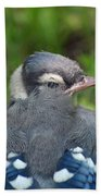 Feathered Jay Beach Towel