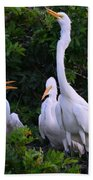 Feeding Time In The Great White Egret Rookery Beach Towel