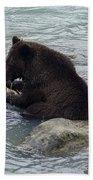 Feasting Bear Beach Towel