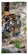 Feline Focus Beach Towel