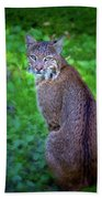 Female Bobcat Beach Towel