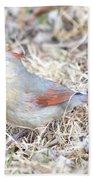 Female Cardinal Beach Towel