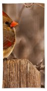 Female Cardinal On The Fence Beach Towel