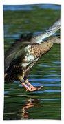 Female Duck Landing Beach Towel