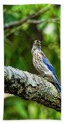 Female Eastern Bluebird Portrait Beach Towel