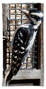 Female Hairy Woodpecker Beach Towel