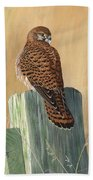 Female Kestrel Study Beach Towel