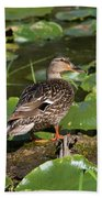 Female Mallard Among Lily Pads Beach Towel