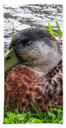 Female Mallard Duck Resting 4 Beach Towel