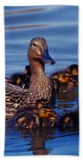 Female Mallard Duck With Chicks Beach Towel
