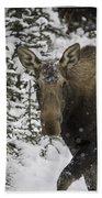 Female Moose In A Winter Wonderland Beach Towel