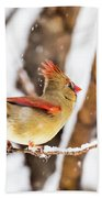 Female Northern Cardinal In The Snow Beach Towel