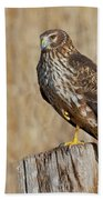 Female Northern Harrier Standing On One Leg Beach Towel