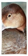 Female Redhead Duck Beach Towel