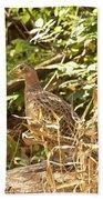 Female Ring-necked Pheasant - Phasianus Colchicus Beach Towel