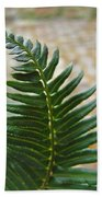Fern Art Prints Green Garden Fern Branch Botanical Baslee Troutman Beach Towel