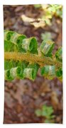 Fern Branch Leaves Art Prints Forest Ferns Natures Baslee Troutman Beach Towel