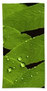 Fern Close-up With Water Droplets  Beach Towel