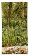 Fern Forest Beach Towel