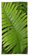 Fern Leaf In June Beach Towel