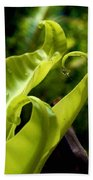 Fern Leaves Beach Towel