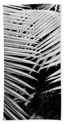 Fern Room Cycads Beach Towel