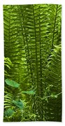 Fern Beach Towel