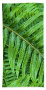 Ferns After A Spring Rain Beach Towel