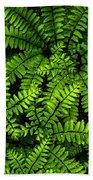 Ferns After The Rain Beach Towel