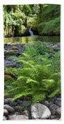 Ferns Along Banks Of Eagle Creek Beach Sheet