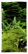 Ferns And Moss On The Ma At Beach Towel