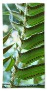 Ferns Art Prints Green Forest Fern Sunlit Giclee Baslee Troutman Beach Towel